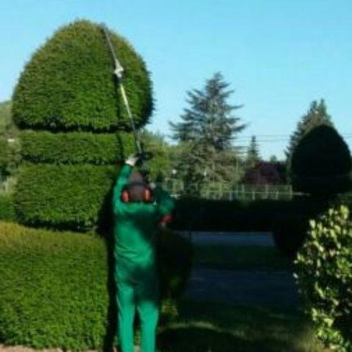 Trabajo de jardineria